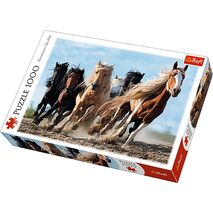 Trefl - Galopping horses