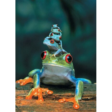 Eurographics - Red-Eyed Tree Frog